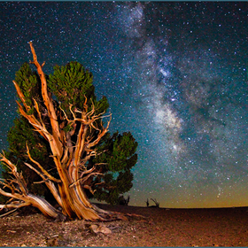 _mg_0351-mail-850-milkyway_with_bristlecone_pine